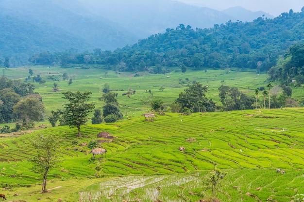 Рисовые поля в шри-ланке