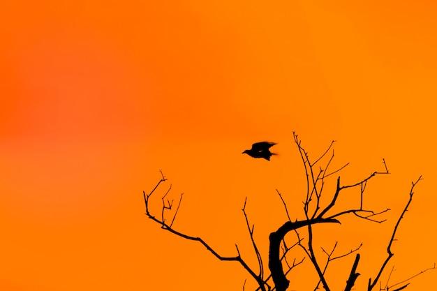 節くれだった木のシルエットとハロウィーンの背景とオレンジ色の夕暮れに対する空飛ぶカラス