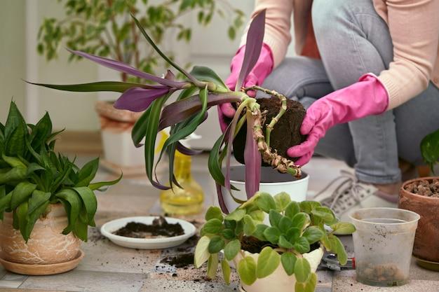 庭師は新しいポットに花を植えるピンクの手袋を手に。 。春の時間。