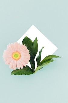 青のフレームにピンクのガーベラの花