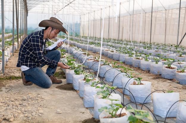 若いグリーンメロンや温室で成長しているメロン