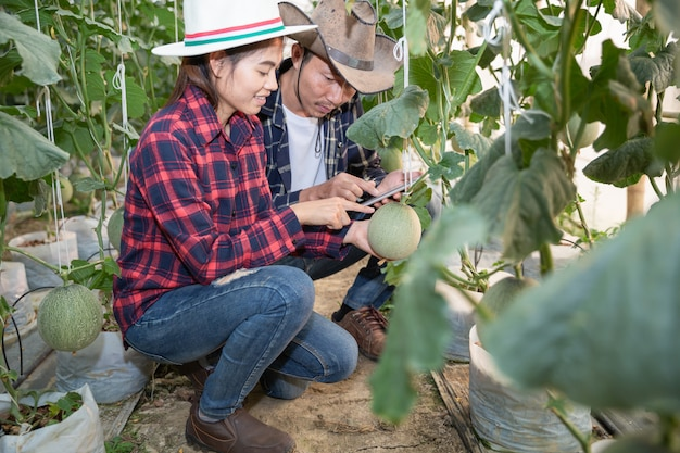 若い農家は温室農場へのメロン効果の成長を分析しています
