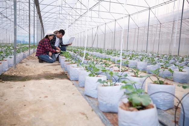 タブレットを持つ農業研究者はゆっくりと植物を調べます。