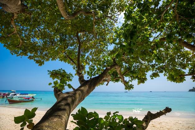 熱帯のビーチ、クラビ、タイ