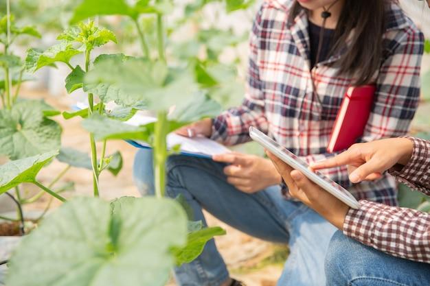 農学者は農場で成長しているメロンの実生、農家および研究者を植物の分析で調べます。