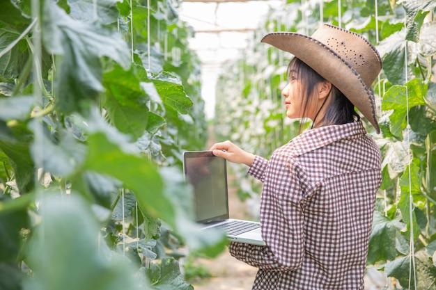 Исследователи растений изучают рост канталупы.