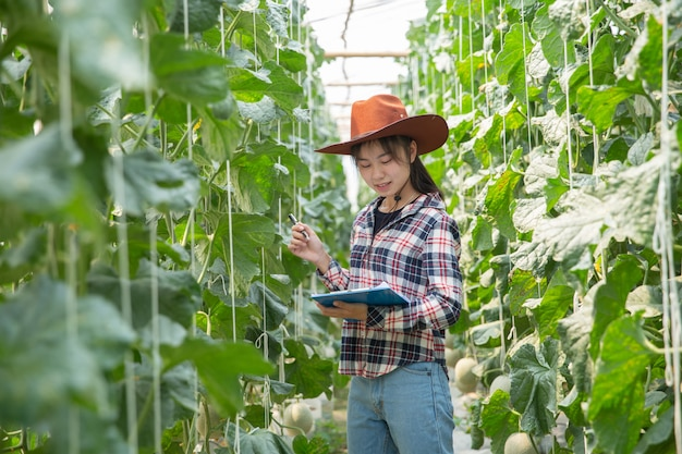 Фермер контролирует дыню на дереве. концепции устойчивого проживания, работы на свежем воздухе, общения с природой, здорового питания.