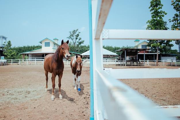 馬の農場で