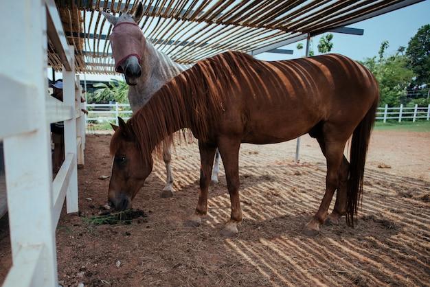Лошадь на конной ферме