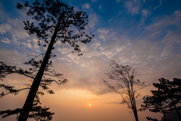 雲、青い空、木と夕日
