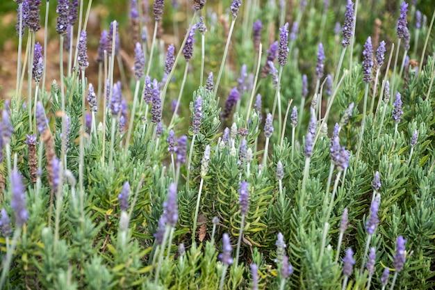 庭の小さな紫色の花