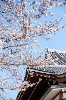 日本の寺院で桜の木