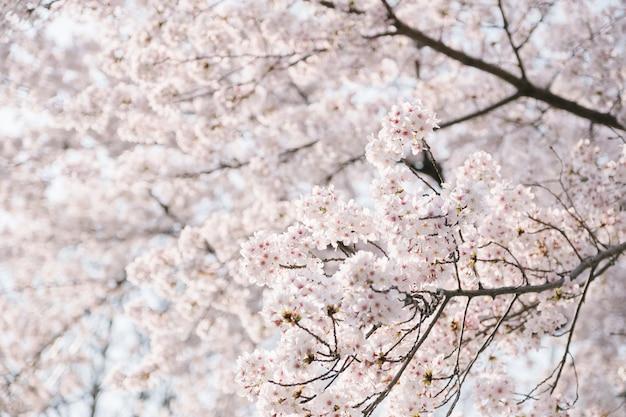桜の木をクローズアップ