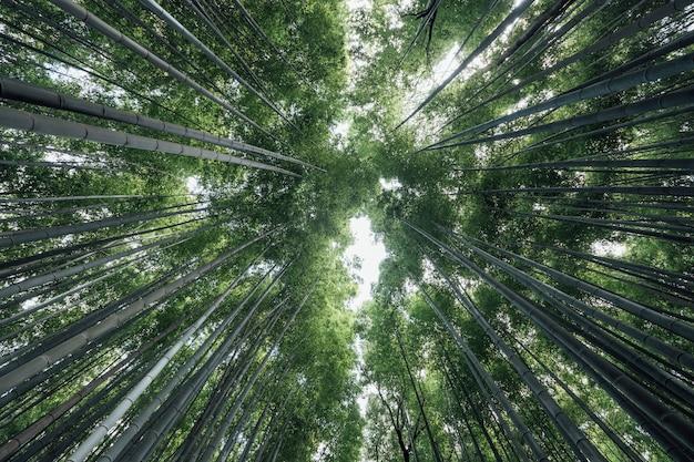 日本の嵐山竹林