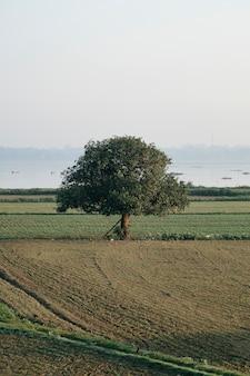 大きな木の野原で孤独