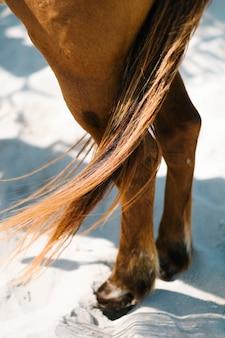 馬の尾をクローズアップ