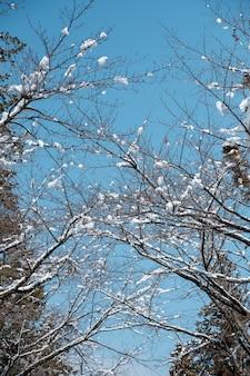 日本の森の枝で雪が降る