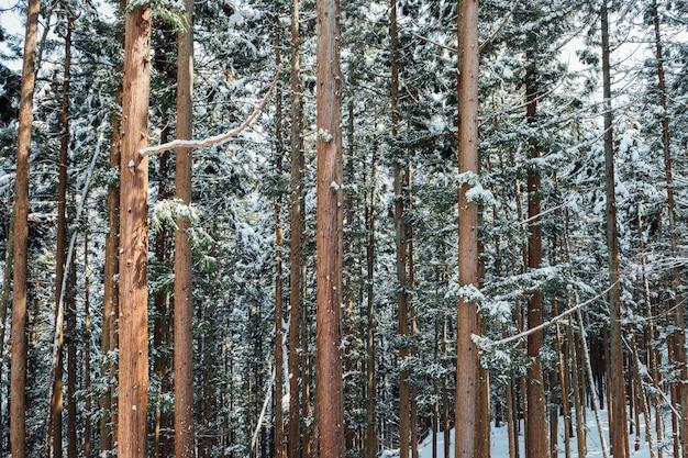 日本の雪の森