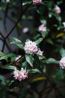 庭の美しいピンクの花びらの花