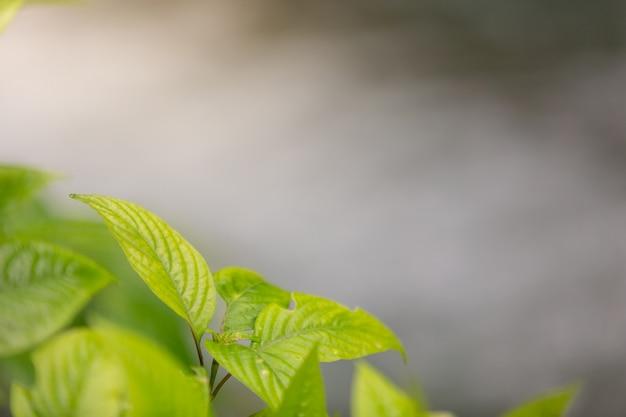 Зеленый лист в лесу.