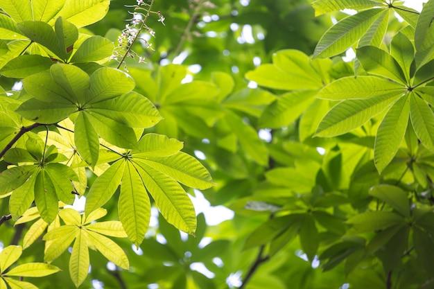 森の中の緑の葉の背景。