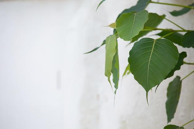 緑の葉のパターンの背景とデザイン。