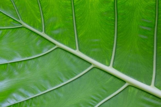 背景の葉の模様とデザイン。