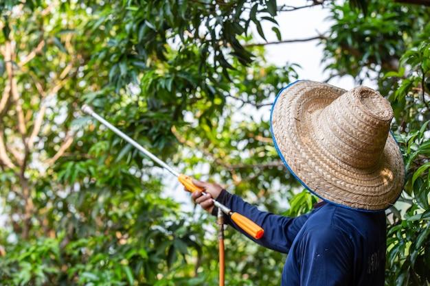 農家は庭にライチをスプレーします。