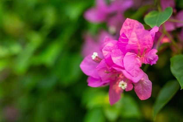 ピンクの花の背景。