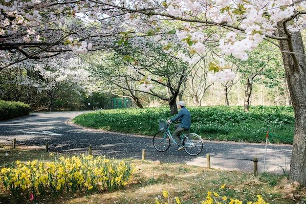 Человек на велосипеде по тропинке в парке сакуры