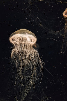 Медуза в баке с водой