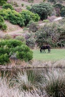 森の中の馬