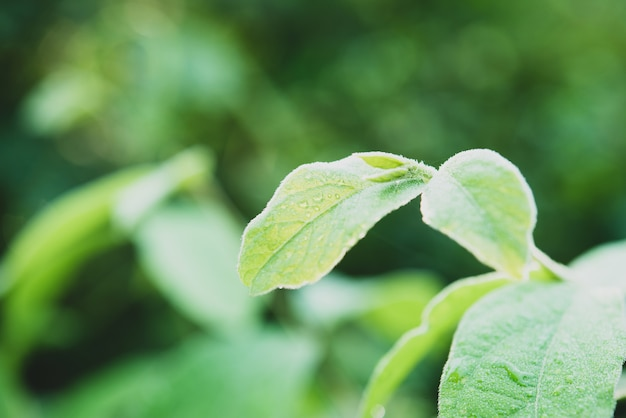 緑の葉のマクロに雨水。