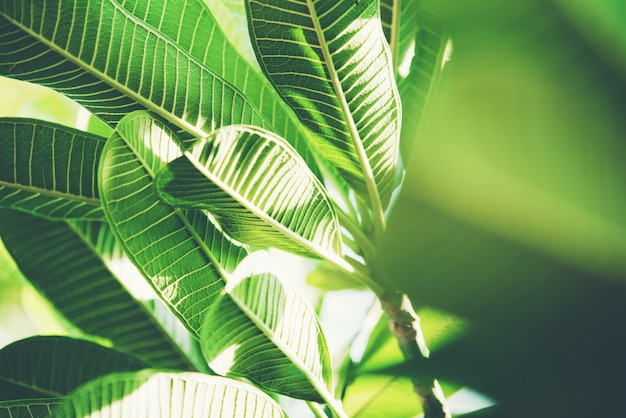 抽象的な自然の緑の葉