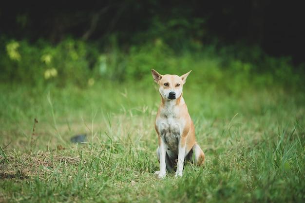 国の未舗装の道路の上を歩く犬