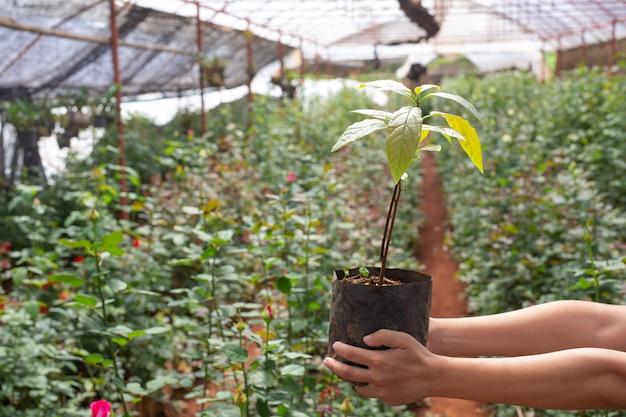 農業。若い女性が保育園で作業を検査します。