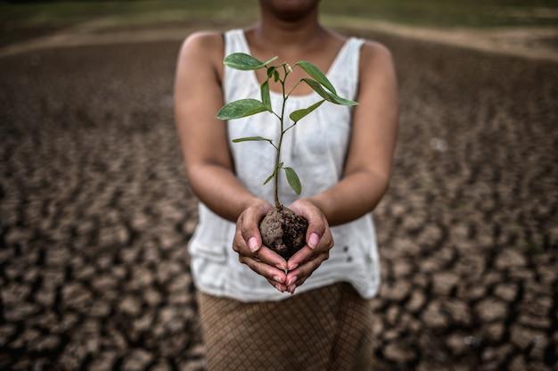温暖化の世界では、女性は乾燥した土地に苗木を持って立っています。