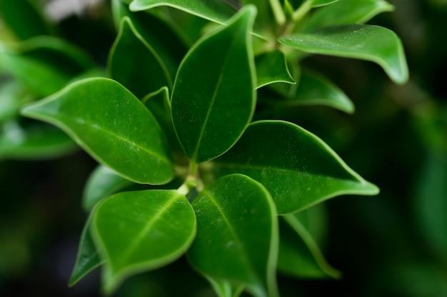 濃い緑の葉