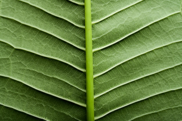 Закройте зеленую линию листьев