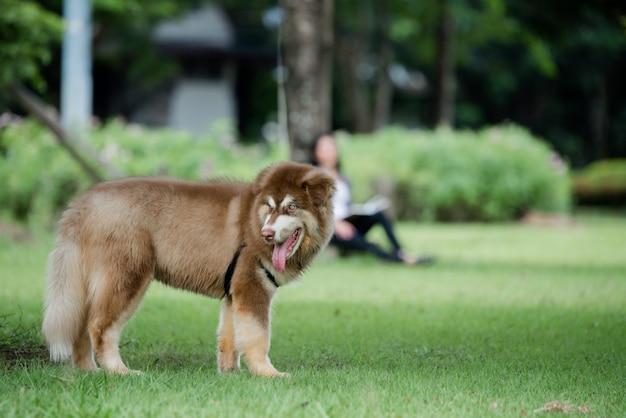 屋外の公園で小さな犬。ライフスタイルの肖像画。