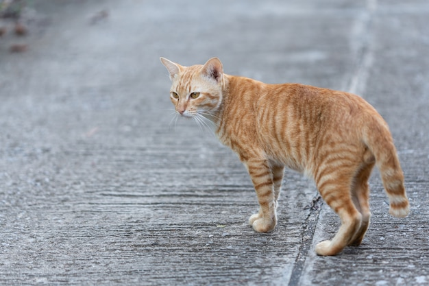 Кошка гуляет по улице.