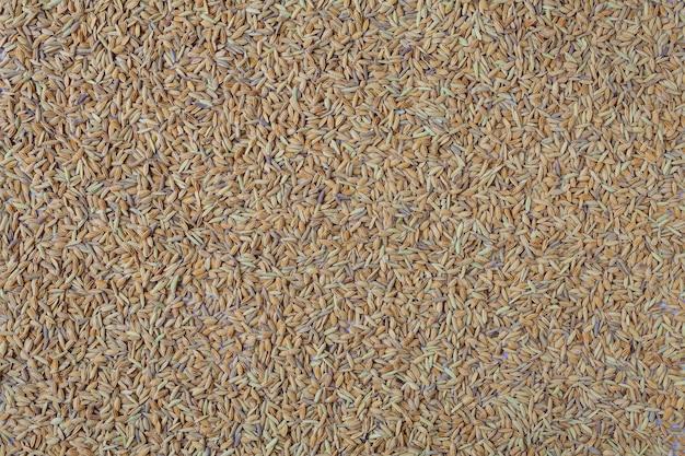 Полна рисовых полей.