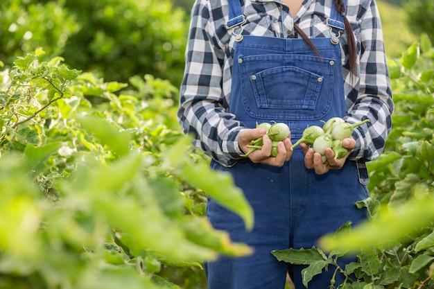 Рука фермера, женщина, держащая в руке овощ, и рисовое поле.