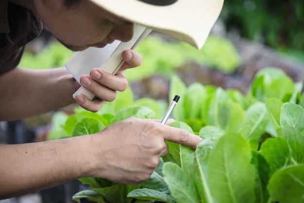 彼の有機レタスの庭で働く農場の人