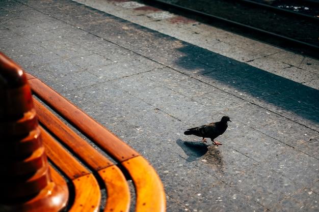 公共の場での鳥の散歩