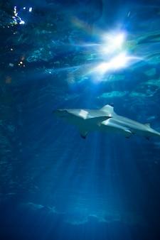 タンク内のサメ