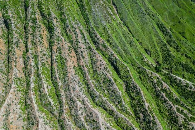 植物で覆われた山のはしご
