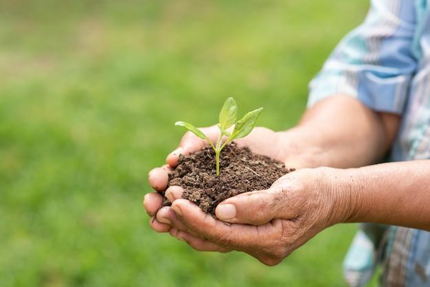 Пожилой человек держит растение
