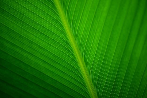 バナナ植物の葉を閉じる