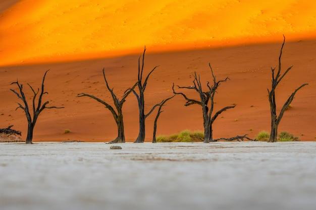 ナミビアのナウブナウクルフト国立公園のデッドヴレイナミビアのソススフレイ-青い空とオレンジ色の砂丘に対する死んだキャメルソーンの木。